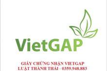 Hướng dẫn cấp giấy chứng nhận Vietgap cho nông hộ